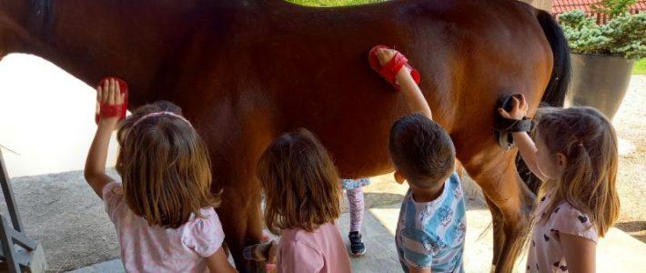 3-dnevno bivanje otrok na Turistični kmetiji Zevnik
